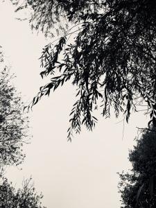 Manche mögen Poesie Manche - das heißt nicht alle. Nicht einmal die Mehrheit, sondern die Minderheit. Wislawa Szymborska (1923-2012)